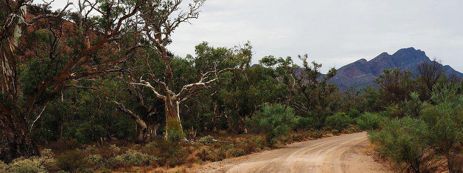 Outback Australia, Flinders Ranges, Remote, Dead Trees