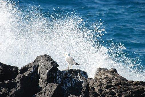 Seagull, Surf, Surf Wave, Tenerife