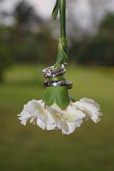 Wedding, Flower, White, Marriage, Wedding Rings
