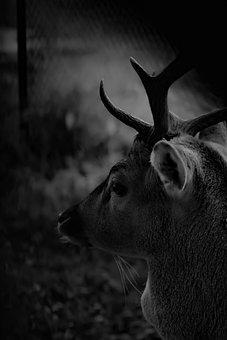Deer, Wild, Nature, Park