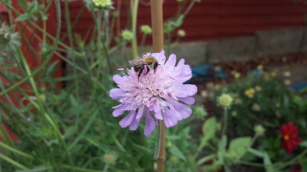 Bees, Flower, Wildflower, Garden, Floral, Pollination