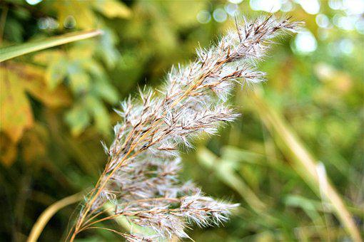Grass, Dry, Heave, Wind, Autumn, November, Halme