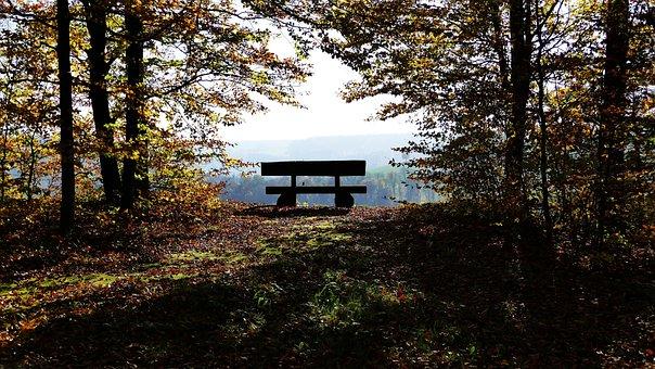 Landscape, Nature, Forest, Bank, Leaves, Autumn, Bird