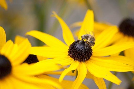 Sun Hat, Bee, Honey, Pollen, Flower, Blossom, Bloom