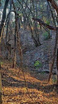 Bushland Forest, Northern Australia, Woodland
