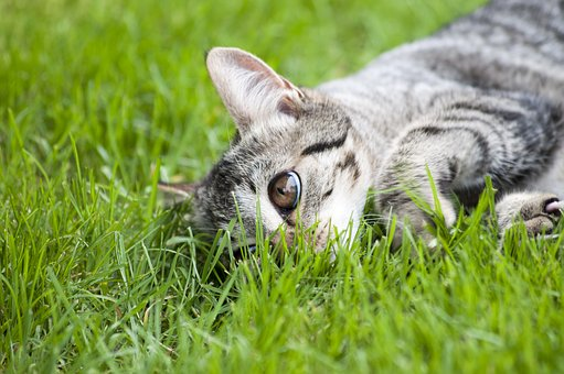 Cat, Adidas, Animal, Domestic Cat, Eyes, Cat Portrait