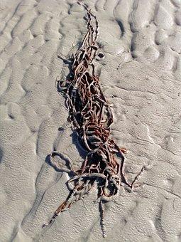 Beach, Tang, Flotsam, Coast, Washed Up On, Maritime