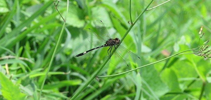 Insect, Macro, Dragonfly, Armenia