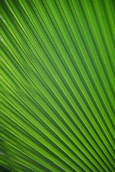 James, Leaf, Tropical, Palm Leaf, Frond, Green, Close