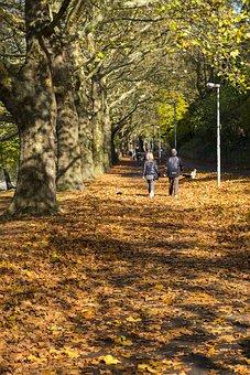 Away, Sidewalk, Avenue, Autumn, Leaves, Trees, Nature