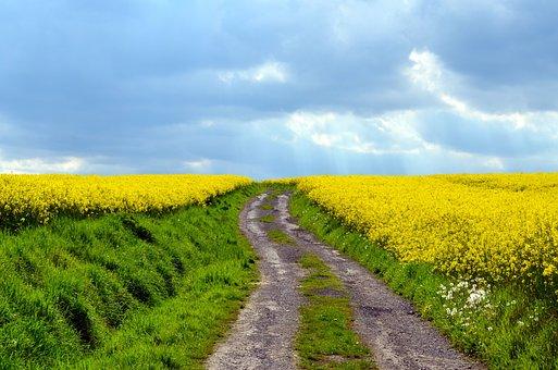 Field Of Rapeseeds, Lane, Landscape, Extertal, Nature