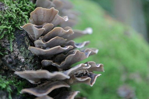 Tree Fungus, Mushroom, Nature, Dewdrop, Forest