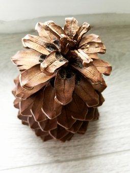 Pine Cone, Macro, Round, Nature, Closeup, Spain
