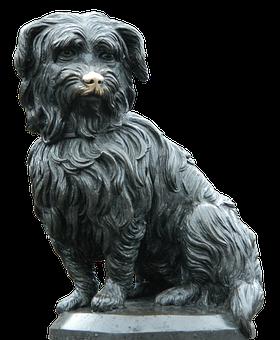 Dog, Animal, Pet, Companion, Young Dog, Friend, Race