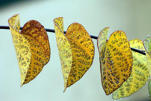 Leaves, Leaf, Colorful, Spring, Rain, Raindrop, Yellow