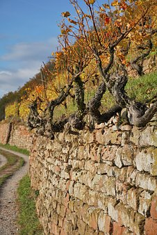 Vineyard, Wine, Winegrowing, Slope, Vines, Nature, Vine