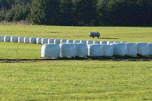 Silage, Food, Agriculture, Cattle Feed, Feed Stock, Hay