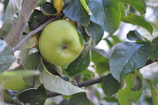 Nature, Fruit, Apple, Food
