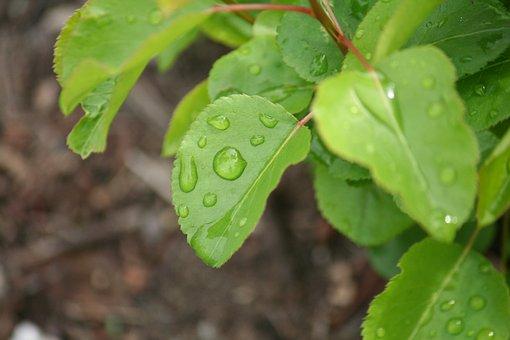 Leaves, Drops, Macro, Drops Of Water, Sheet, Autumn