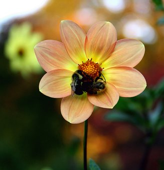 Bees, Fall Plant, Insect, Fall, Blossom, Flower, Nature