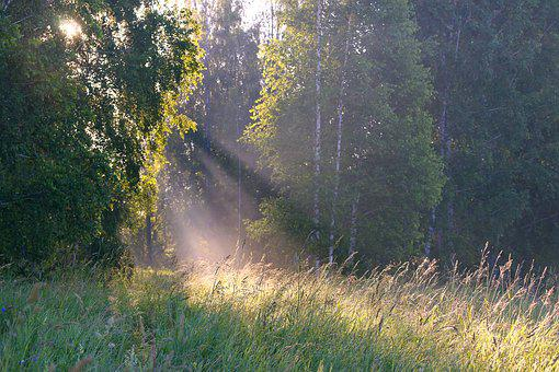 Summer, Landscape, Background, Dawn, Fog, Beautiful
