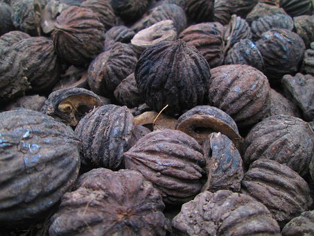 Seed, Natural, Texture, Organic, Color, Tree, Detail