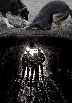 Dogs, Digging, Mine, Funny, Image Editing