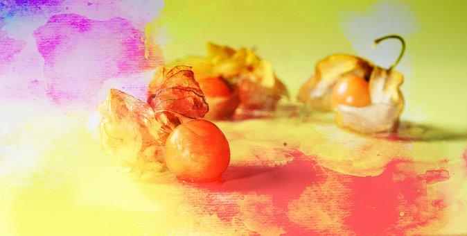 Physalis, Gold Berry, Watercolour, Fruit, Decoration