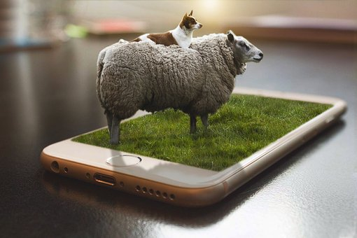 Manipulation, 3d, Photoshop, Sheep, Dog, Grass, Daddy