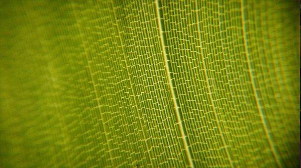 Leaf, Green, Nature, Green Leaf, Foliage, Green Leaves