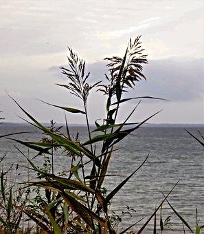 Baltic Sea, Autumn Mood, Grey Sea, Gray Clouds, Grasses