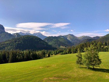 Green, Landscape, Nature, Sunny, Grass, Tree, Blue