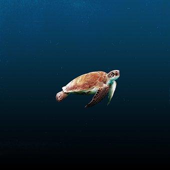 Water, Ocean, Animals, Blue, Calm, Underwater