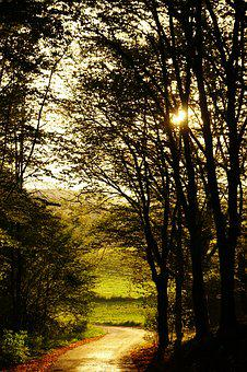 Sunset, Forest, Mood, Road, Autumn, Abendstimmung