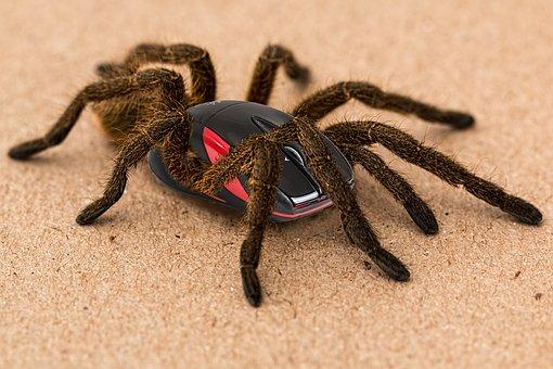 Spider, Scary, Mistake, Hybrid, Mouse, Creepy, Spooky