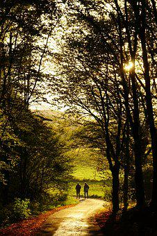 Sunset, Forest, Mood, Human, Walkers, Road, Autumn