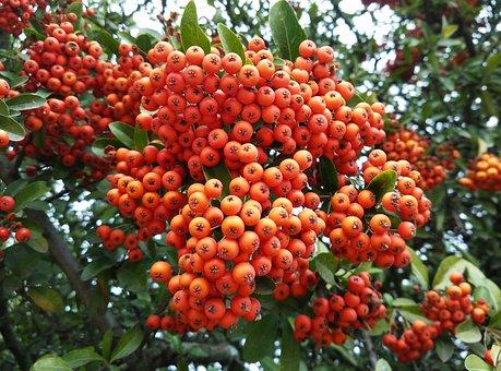 Berries, Forest, Autumn, Nature, Landscape, Plants