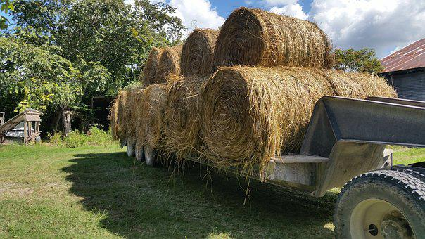 Hay, Bales, Trailer, Feed
