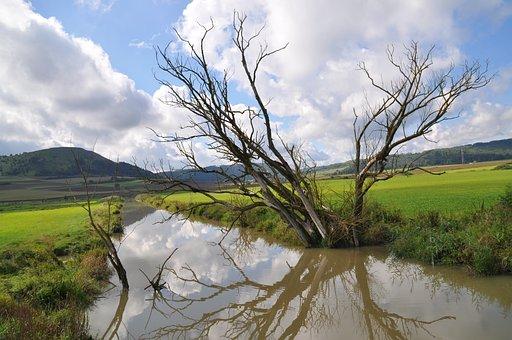Dead Tree, Dead Plant, Beaver, Water Reflection