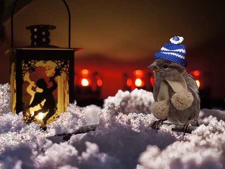 Advent, Light, Sparrow, Christmas, Flame, Candlelight