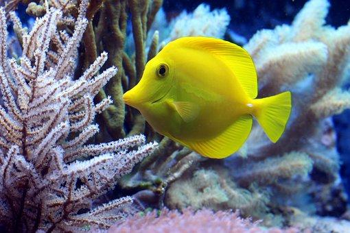 Fish, Coral, Surgeonfish, Underwater, Diving, Sea