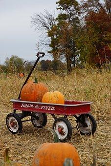 Halloween, Pumpkin Patch, Pumpkins, Farm, October