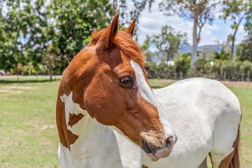 Horse, Animal, Farm, Riding