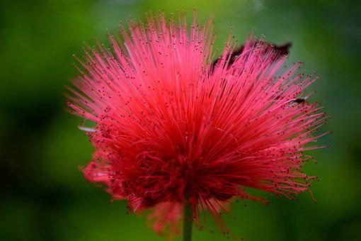 Blossom, Bloom, Red, Close, Macro, Flower, Nature
