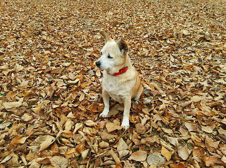 Autumn, Dog, Pet, Can, Dry Leaf, Walk, Forest, Animals