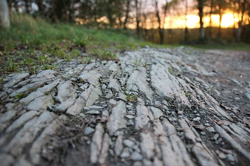 Away, Forest, Slate, Hiking, Perspective, Forest Floor