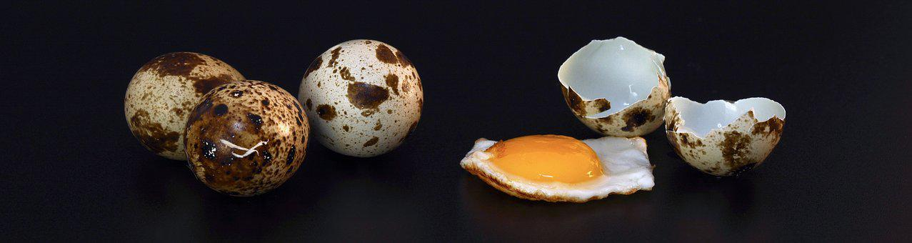 Quail Egg, Shell, Fried, Cooked, Eat, Food, Egg