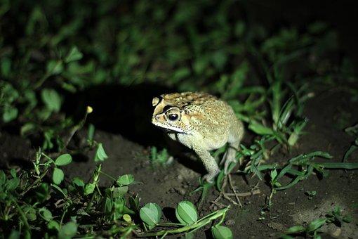 Frog, Jungle, Tropics, Rainforest, Tropical, Exotic