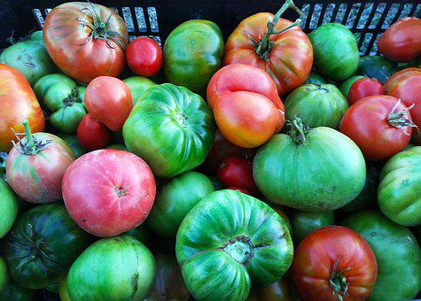Tomatoes, Harvest, Cultivation, Orchard, Food
