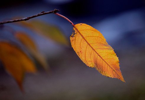 Autumn, Fall Foliage, Leaf, Leaves, Autumn Colours